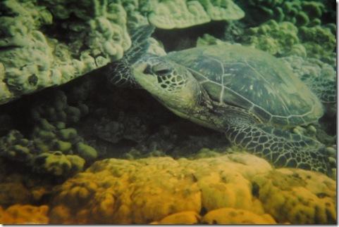 turtles 002